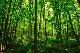 ISO 14001 Forest